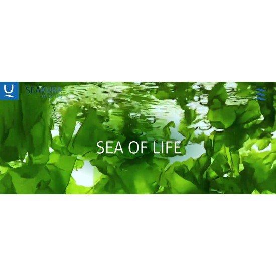 Seakura - Иновативна компания, която разработва пилотна технология, позволяваща отглеждането на водорасли на сушата
