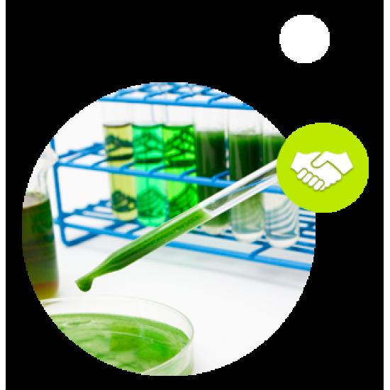 Alganelle - иновативна френска биотехнологична компания, специализирана в разработването и производството на естествени молекули от микроводорасли с висока добавена стойност